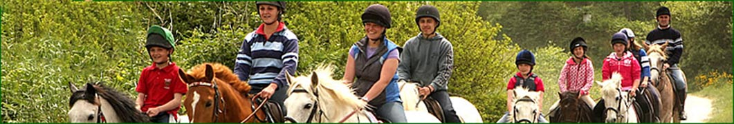 horse training bannerb